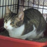 Adopt A Pet :: Bebe - Westville, IN