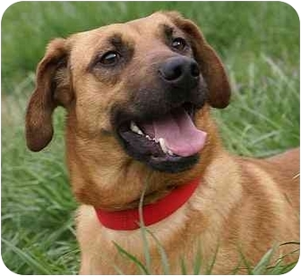 Shepherd (Unknown Type) Mix Dog for adoption in Harrisonburg, Virginia - Missy Holiday Special