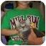 Photo 2 - Domestic Shorthair Kitten for adoption in Reston, Virginia - Houston