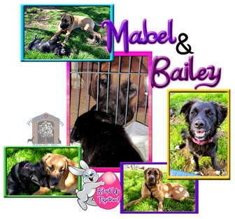 Mastiff/Great Dane Mix Dog for adoption in Colleyville, Texas - Mabel