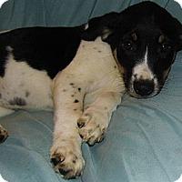 Adopt A Pet :: Mason - Bel Air, MD