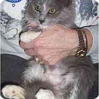 Adopt A Pet :: Missy - Scottsdale, AZ