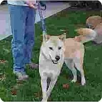 Adopt A Pet :: Tony - Southern California, CA
