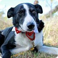 Adopt A Pet :: Remus Lupin - Austin, TX