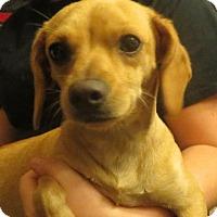 Adopt A Pet :: Rosie - Salem, NH