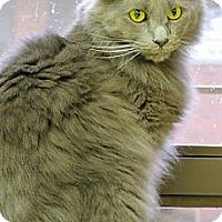 Adopt A Pet :: Eeyore - Pineville, NC
