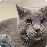 Adopt A Pet :: Ellie Marie - Chicago, IL