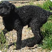 Adopt A Pet :: Synclair - Prole, IA
