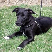 Adopt A Pet :: Dexter - Lacon, IL