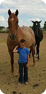 Quarterhorse/Grade Mix for adoption in Peralta, New Mexico - **FLAME