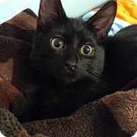 Adopt A Pet :: Donatello - Ortonville, MI