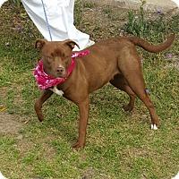 Adopt A Pet :: Sasha - Americus, GA