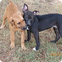 Adopt A Pet :: Maya (AKA Daisy - Boston, MA