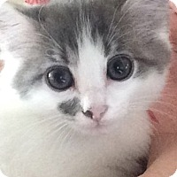 Adopt A Pet :: Ena - Knoxville, TN