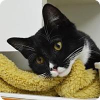 Adopt A Pet :: Mr. Magoo - Menands, NY