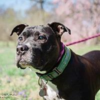 Adopt A Pet :: Boone - St. Louis, MO