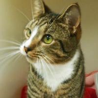 Adopt A Pet :: Jo Jo - Ridgely, MD