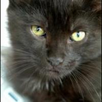 Adopt A Pet :: Rosi - Garland, TX