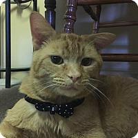 Adopt A Pet :: Theodore - Caro, MI