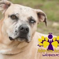 Adopt A Pet :: Paula - Georgetown, TX