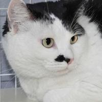 Adopt A Pet :: Snookie - Grand Junction, CO