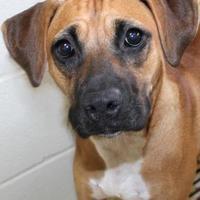 Adopt A Pet :: Aria - Victoria, TX