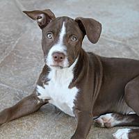 Adopt A Pet :: Toaster - Apache Junction, AZ