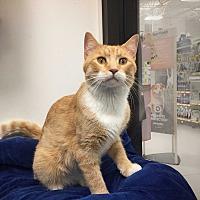 Adopt A Pet :: Dexter (Woodbury Petsmart) - Roseville, MN