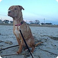 Adopt A Pet :: Sara Jane - East Rockaway, NY