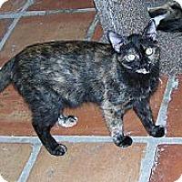 Adopt A Pet :: Nadia - Scottsdale, AZ