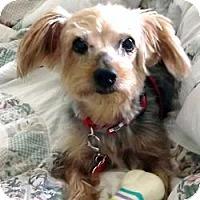 Adopt A Pet :: Lexie - Fairfax, VA