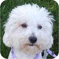 Adopt A Pet :: Jonathan - La Costa, CA