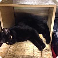 Adopt A Pet :: Little Bob - Muncie, IN
