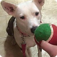 Adopt A Pet :: Tigger-Coutesy Post - Burleson, TX