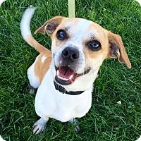Adopt A Pet :: Turbo - Wilmington, DE