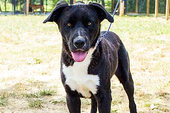Labrador Retriever Mix Dog for adoption in Jasper, Alabama - Happy