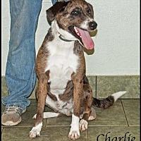 Adopt A Pet :: Charlie - Ada, OK