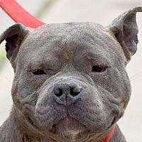 Adopt A Pet :: GRANDMA - New Haven, CT