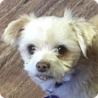 Adopt A Pet :: Toby Rose - Lexington, KY