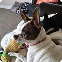 Adopt A Pet :: Bubbles - Oakley, CA