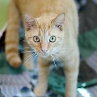 Adopt A Pet :: Eddie - Charleston, SC