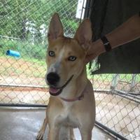 Adopt A Pet :: Lilly - Lufkin, TX