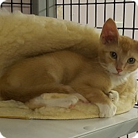 Adopt A Pet :: Fish - Maryville, IL