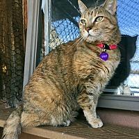 Adopt A Pet :: Spirit - Santa Fe, NM