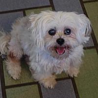 Adopt A Pet :: Cleo Rose - Davie, FL