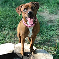 Adopt A Pet :: Sienna - Harrisville, RI