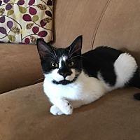 Adopt A Pet :: Angie - Murfreesboro, NC