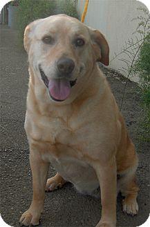 Labrador Retriever Mix Dog for adoption in Sacramento, California - Daisy will die tomorrow