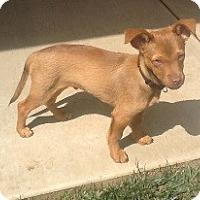 Adopt A Pet :: Tigger - Tustin, CA