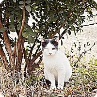 Adopt A Pet :: Wilson - San Antonio, TX